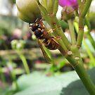 Kew Gardens: Wasp by Paulychilds