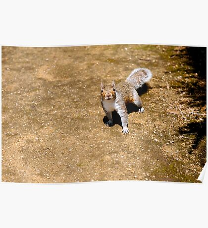 squirrel #48 Poster