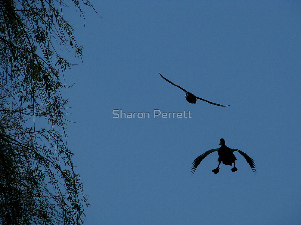 Landing gear is down, Roger wilko over and out..... coming into land by Sharon Perrett