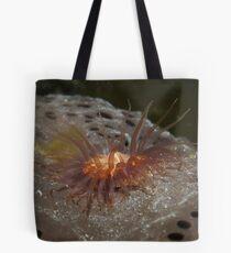 Anemone on a sponge - Upper Spencer Gulf, South Australia Tote Bag