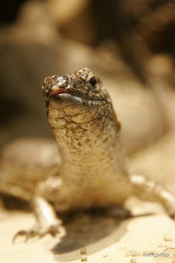 lizard by bettyboop