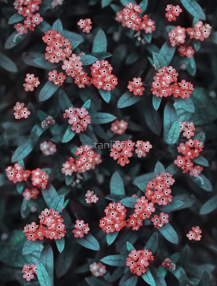 Tiny Red Blossoms. Dark Floral by tanjica