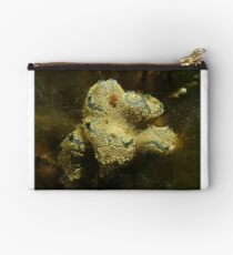 Sea squirts (Botrylloides leachii) - upper Spencer Gulf, South Australia Studio Pouch