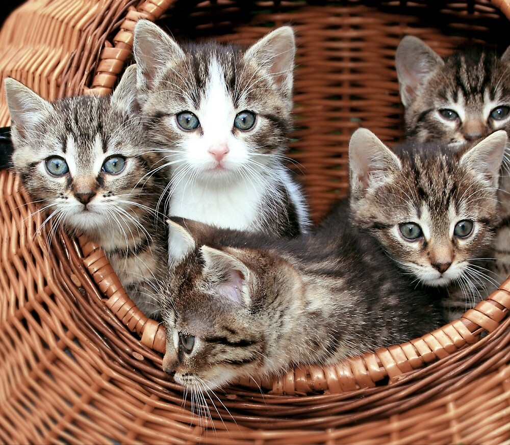 Cute and adorable and grey tabby kittens in a basket by superdazzle