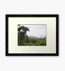 Dominica Rain Forest Framed Print