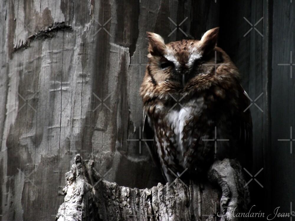 Eastern Screech Owl by mandarinjean