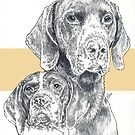German Short-haired Pointer, Father & Son by BarbBarcikKeith