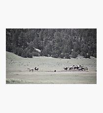 Wild Horses  Photographic Print