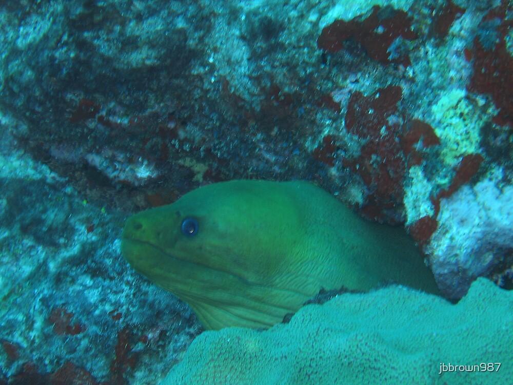 Moray Eel, Aruba by jbbrown987