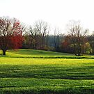 Shadows across the Grassy Meadow by Judi Taylor