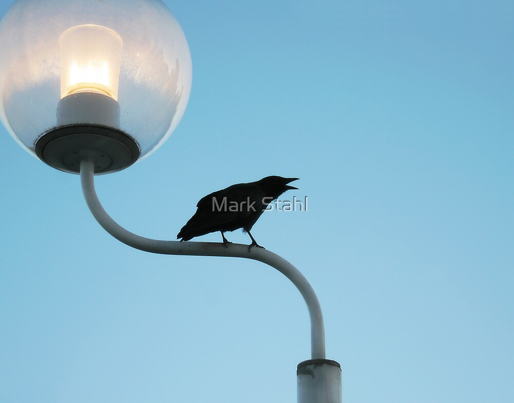 Talking Crow by Mark Stahl