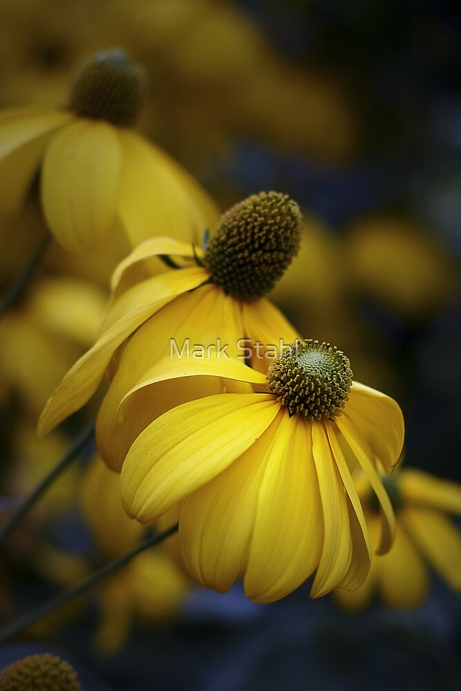 Yellow Coneflower by Mark Stahl