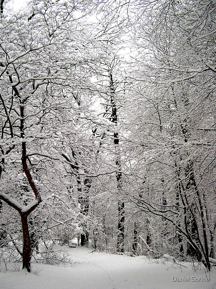 Winter in Scarsdale, NY by Daniel Sorine