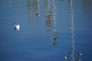 White bird resting on the water by Moshe Cohen