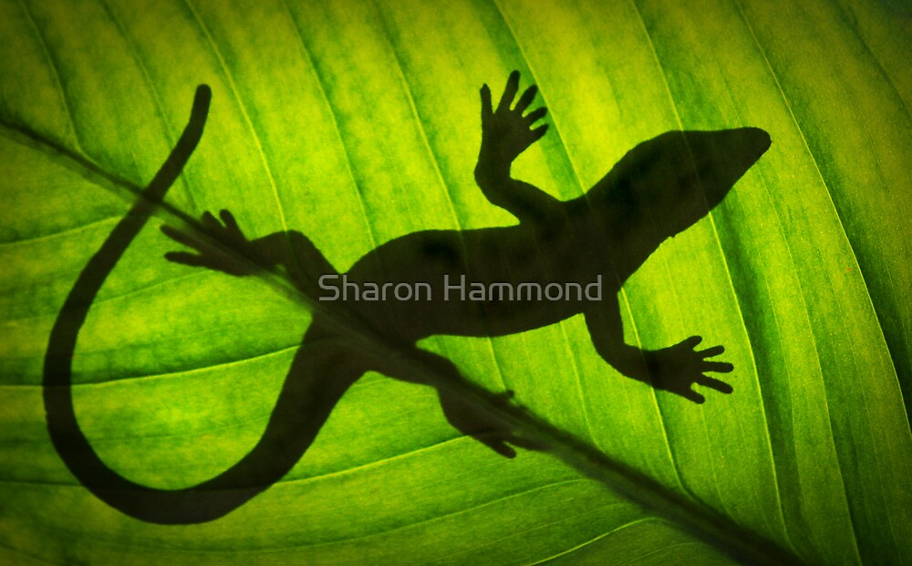 Flat Out Like a Lizard . . . . . . . by Sharon Hammond