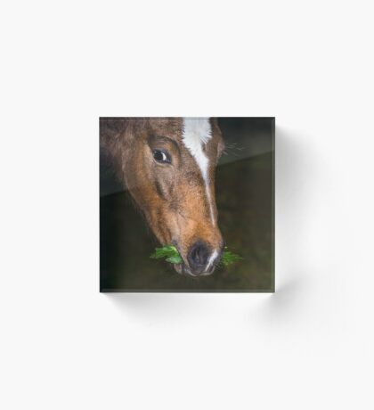 Foal and Leaves Acrylic Block