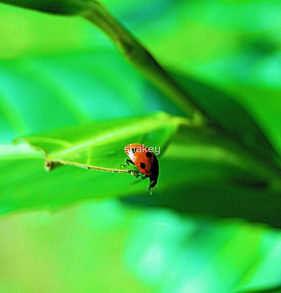 Ladybird by shakey