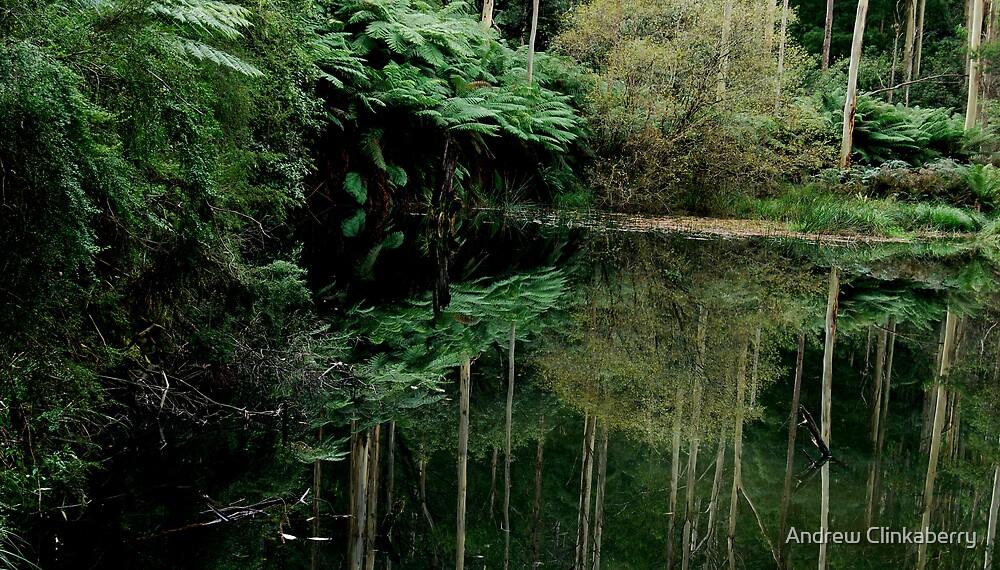 Lake Elizabeth Billabong 2 by Andrew Clinkaberry