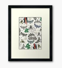 Moths and rocks. Framed Print