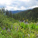 Cascade Mountain Beauty by Fotography by Felisa ~
