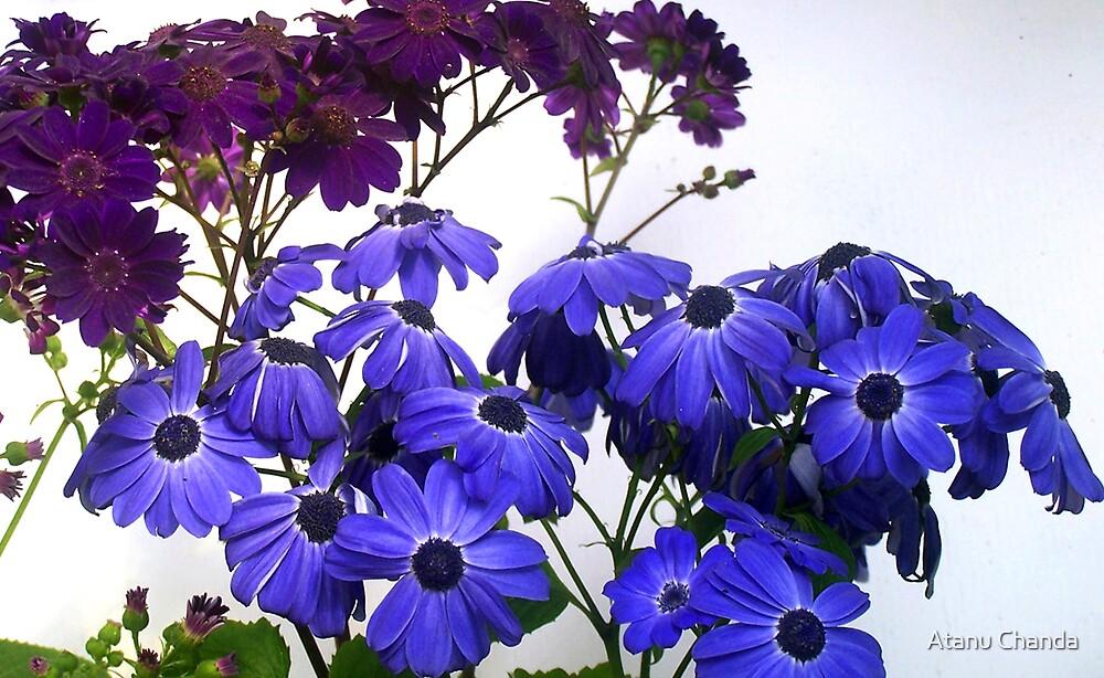 Flower - 06 by Atanu Chanda