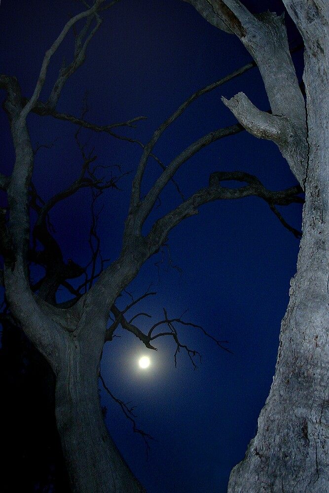 river redgums frame the moon by ingridewhere