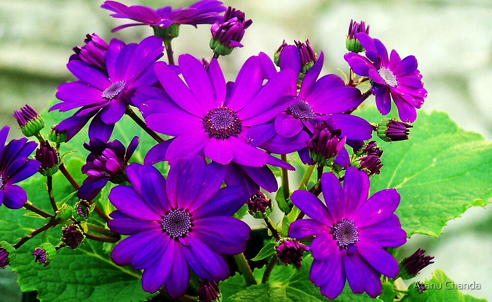Flower - 23 by Atanu Chanda