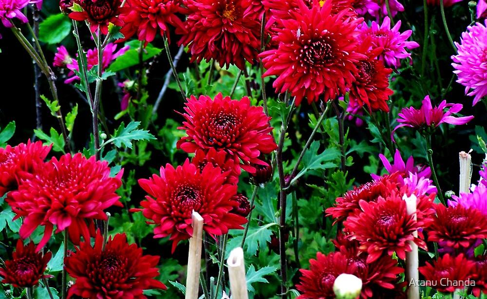 Flower - 26 by Atanu Chanda