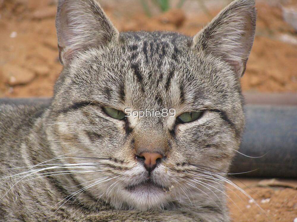 Sad (street cat) by Sophie89