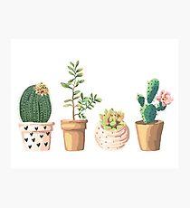 Plants Photographic Print