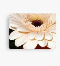 Peach gerbera macro Canvas Print