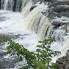 Aysgarth Falls, Yorkshire, UK. by Billlee