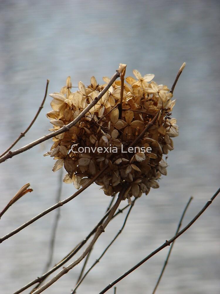 The Snow Ball by Convexia Lense
