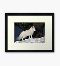 Arctic Fox. Framed Print