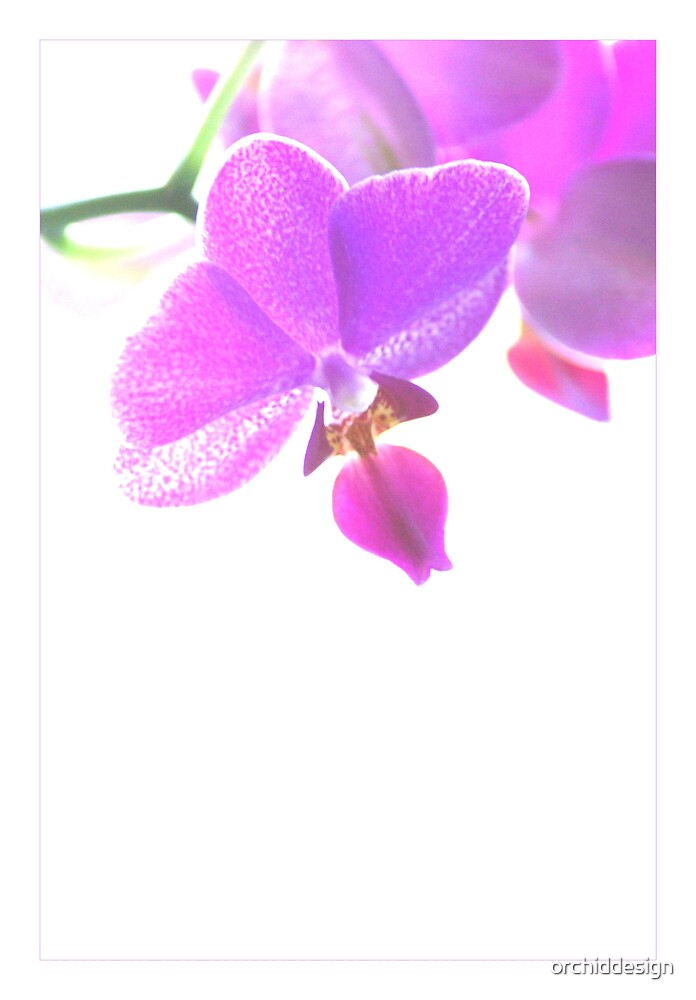 High Key Orchids by orchiddesign