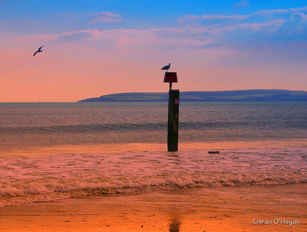 Seagulls at Dusk by Ciaran O'Hagan