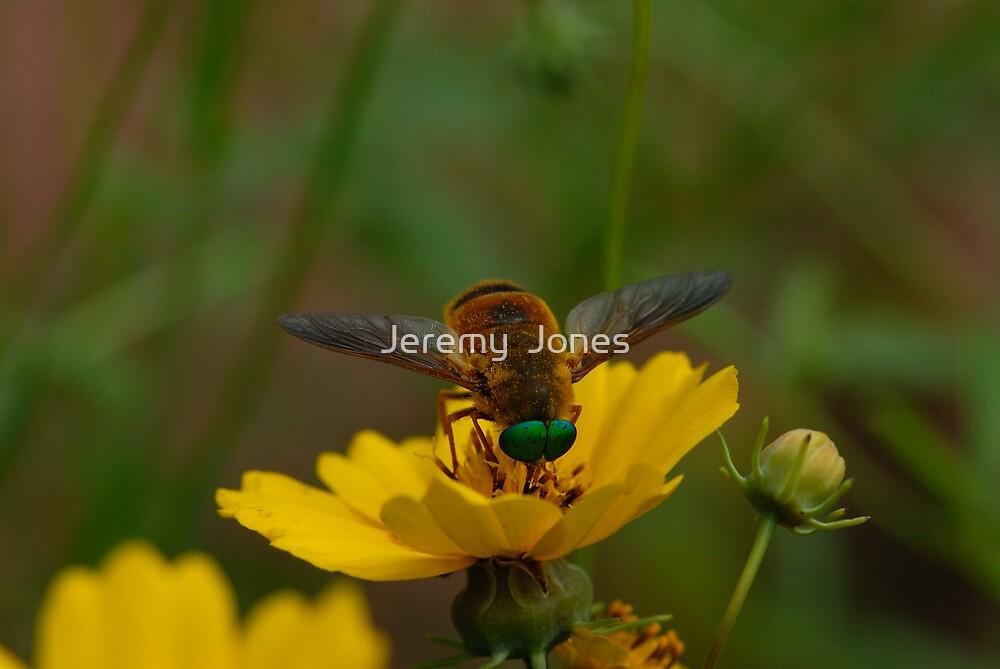 'Ol Green Eyes by Jeremy  Jones