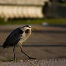Why did the Heron cross the road? by Jonicool