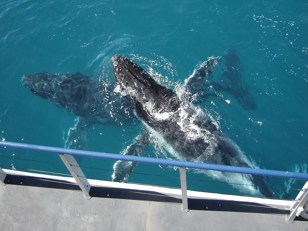humpbacks near boat. by fjsmurfy
