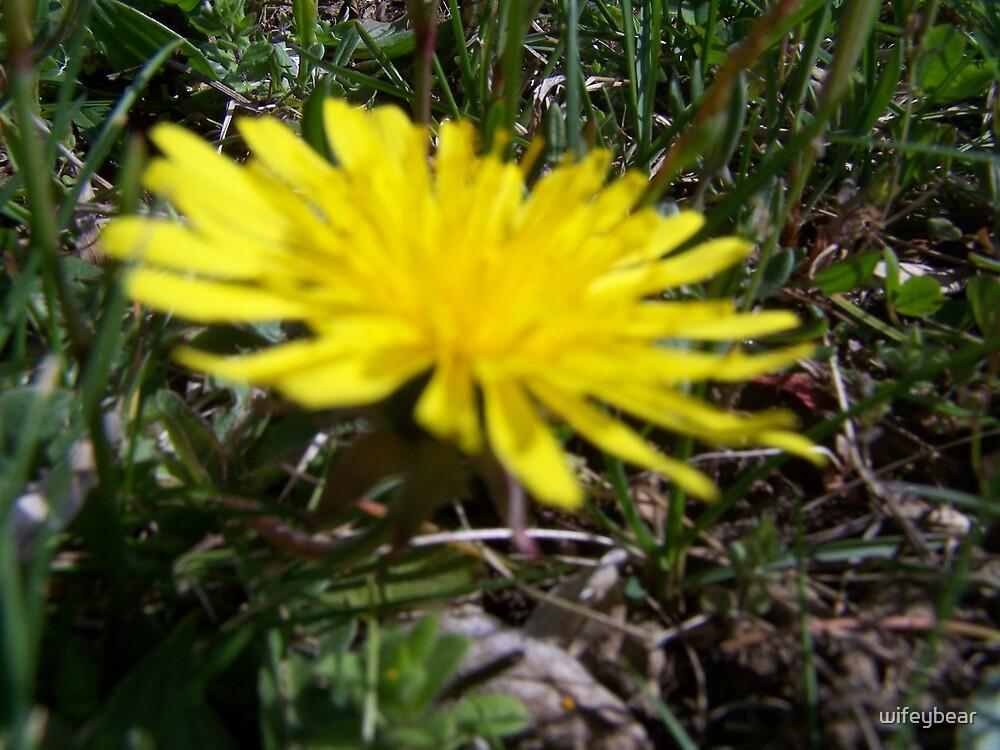 flower by wifeybear