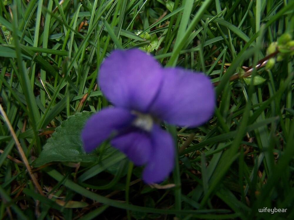 purple night by wifeybear