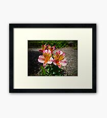 Yellow, Red and Pink Framed Print