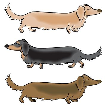 Long Haired Dachshunds off for a trot by Khanagirl