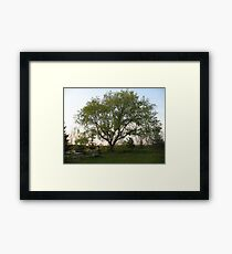 Trees are so unique in each picture Framed Print