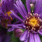 Purple Spears by Aileen David