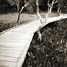 Mangrove boardwalk by Duncan Waldron