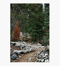 Hiking Path In Forest Photographic Print