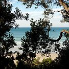 waratah bay by Bronwen Hyde
