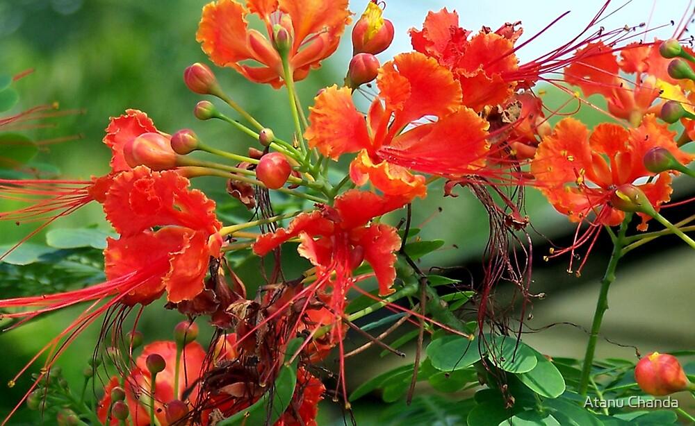Flower - 45 by Atanu Chanda