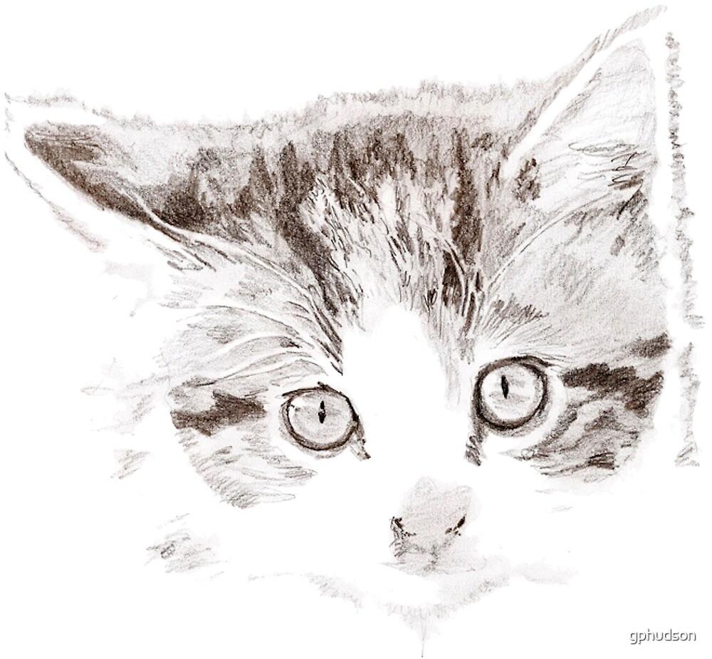 Kitten by gphudson